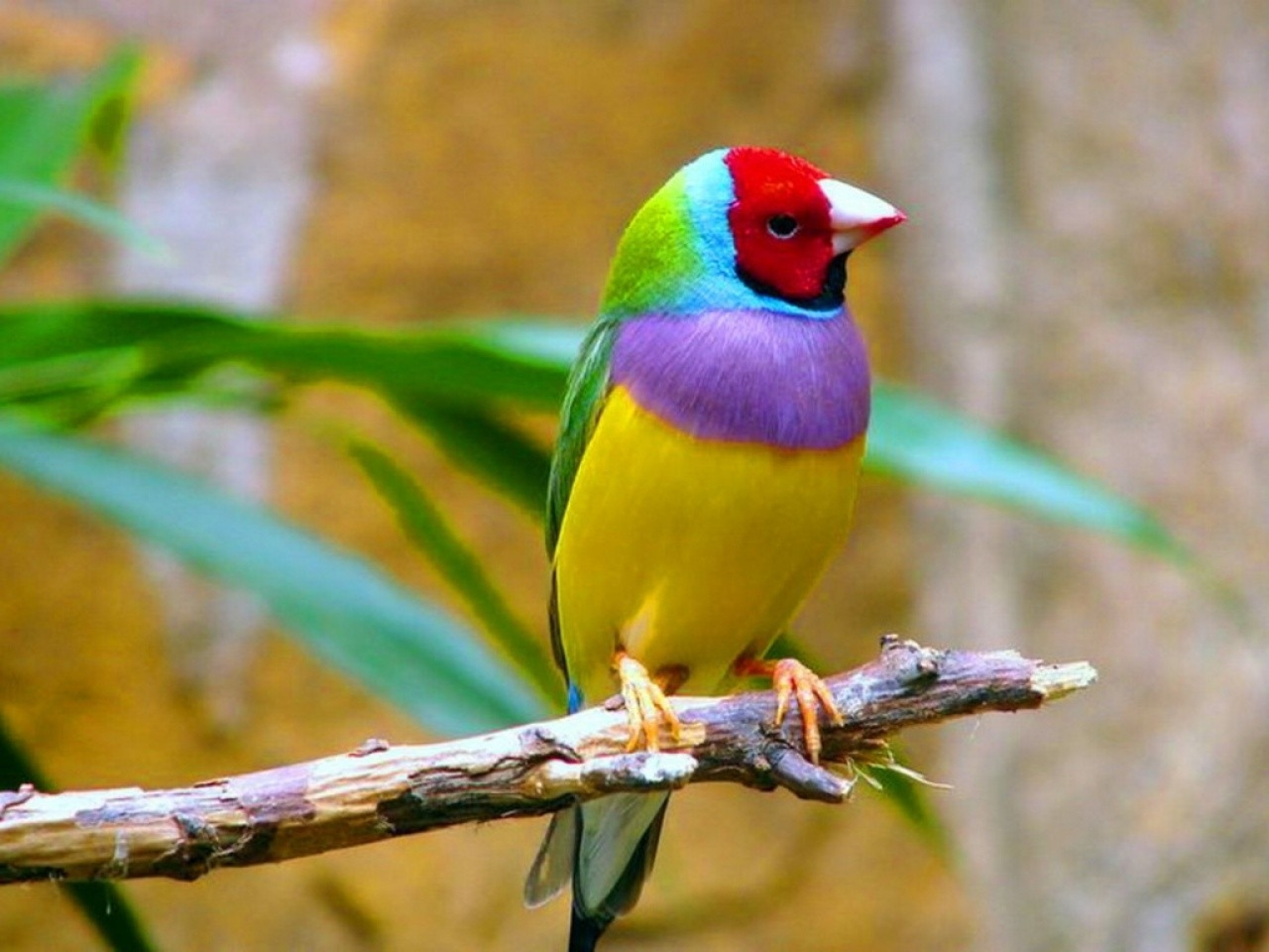 birding in cincinnati cincinnati birds
